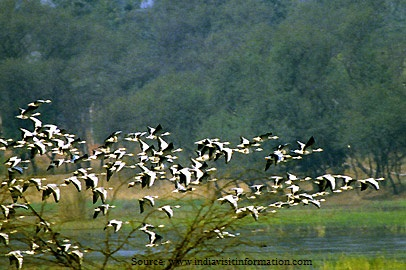 Five places to visit in Gurgaon-Sultanpur Bird Sanctuary